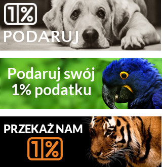 baner_320_100_zestaw_3